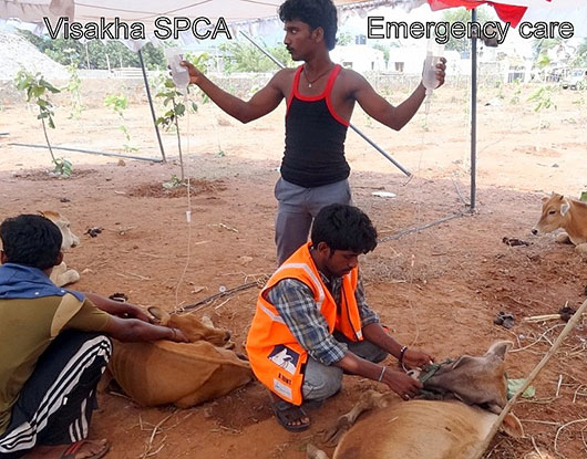 VSPCA Emergency Care
