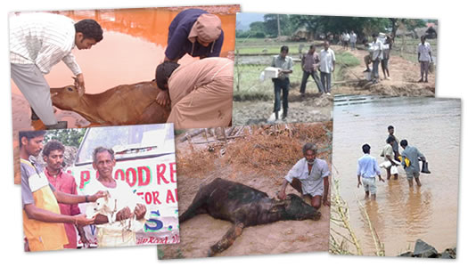 VSPCA's previous flood-time rescue efforts