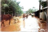 Cows fleeing