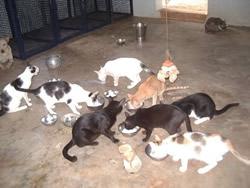 Cats feeding