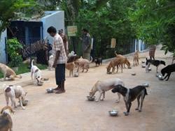 Dogs feeding