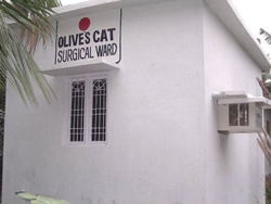 Olive's cat surgery ward