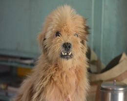 Sponsor an Animal - VSPCA - Andhra Pradesh, India