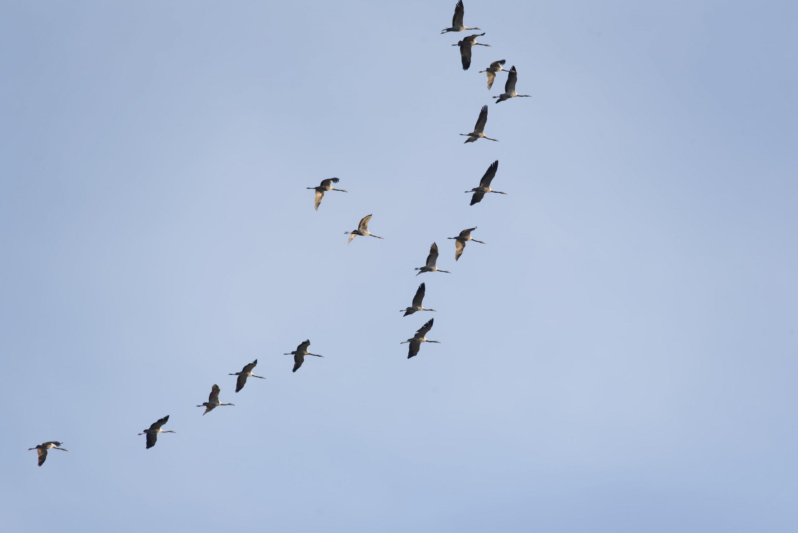 VSPCA migratory bird protection project