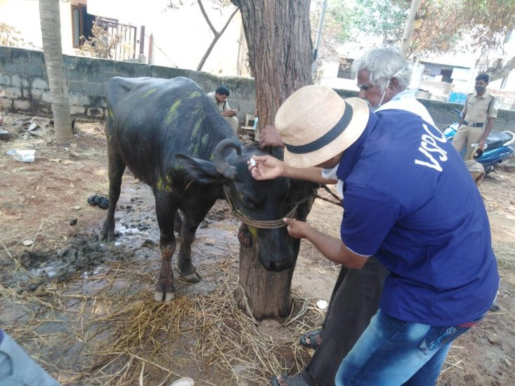 Continued efforts of VSPCA to rescue animals during styrene gas disaster update #5