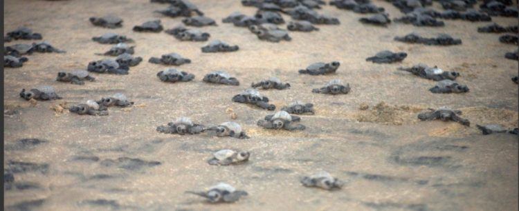 The sea turtle protection report is out!