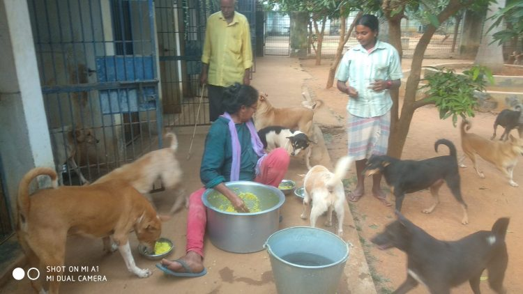 VSPCA Shelters have survived credibly during the Lockdown