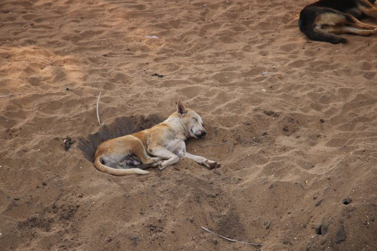Dogs – our responsible watchers to guard the hatcheries
