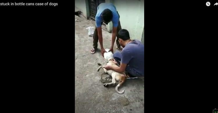 Another case of a dog getting its head stuck in a bottle can