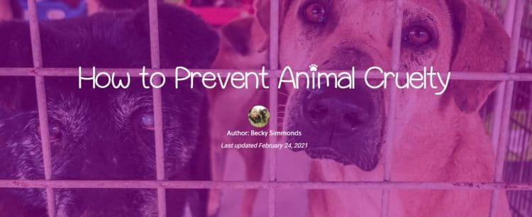 How to Prevent Animal Cruelty by Becky Simmonds