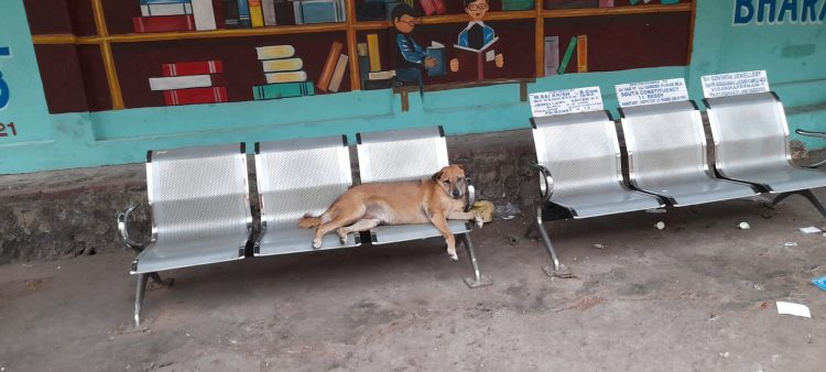 The lockdown led to food scarcity for street animals