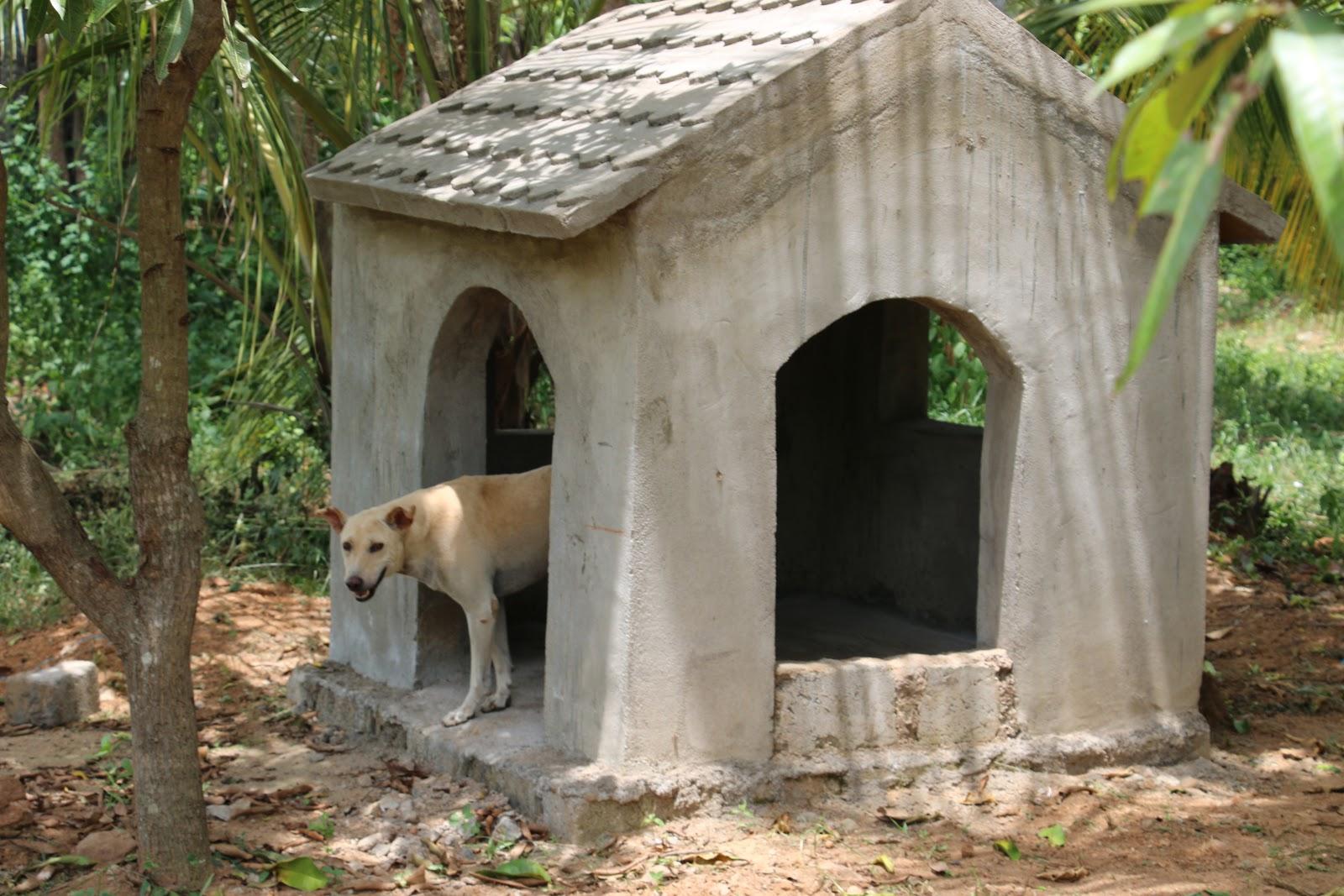 Dog Park at Kindness Farm!